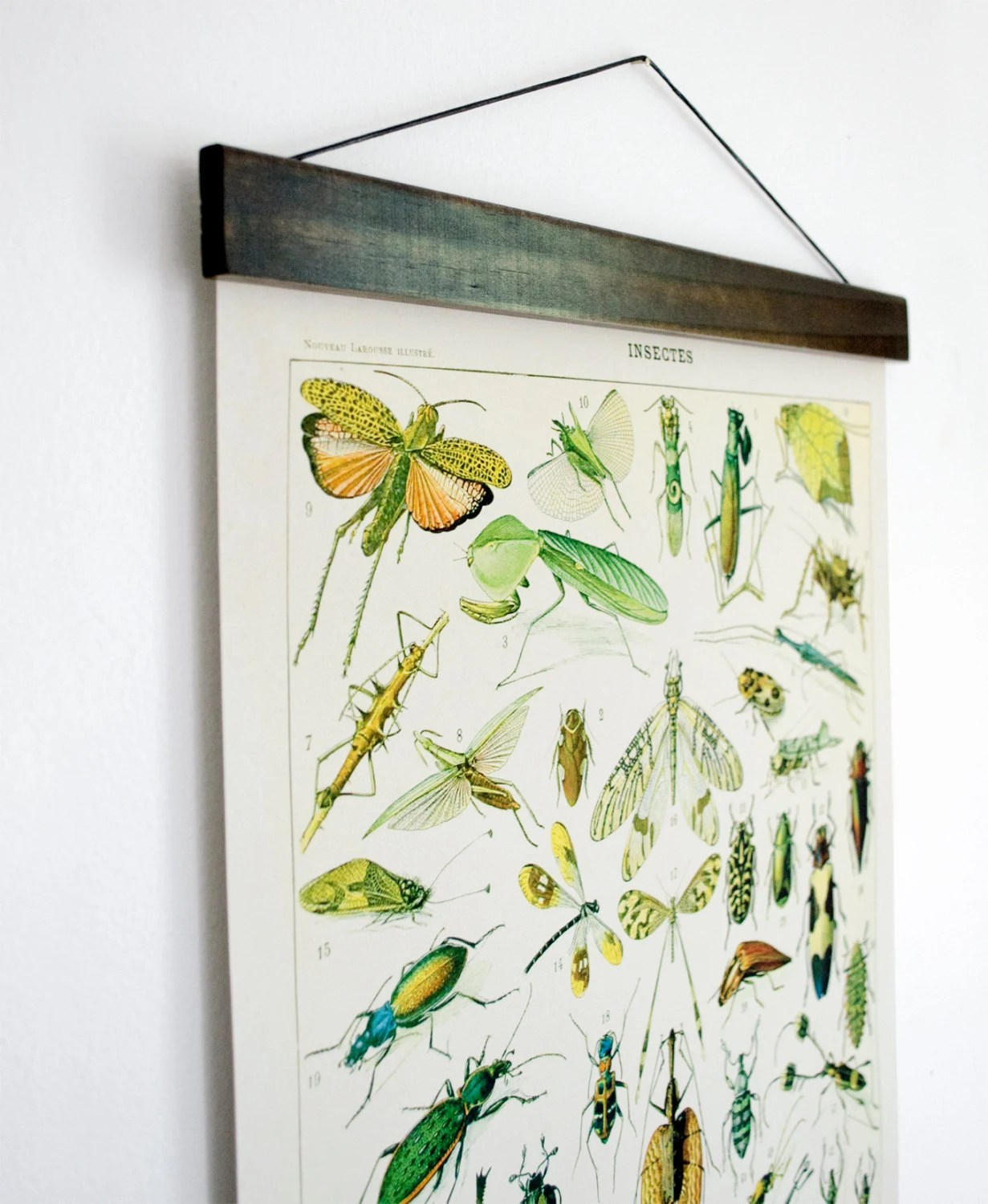 hight resolution of pull down chart insects diagram reproduction canvas print le petit larousse french encyclopedia by millot entomology bugs