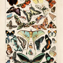 Vintage Diagram Turtle S Head Butterfly 3 Papillons Poster Reproduction Le Etsy Image 0