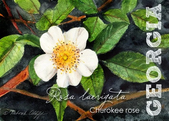 Georgia State Flowers Watercolor Cherokee Rose Aceo Rosa Etsy