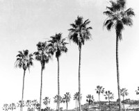Black And White Print Wall Art Beach Decor Beach Art Palm