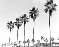 Black And White Print Wall Art Beach Decor Beach Art Palm ...