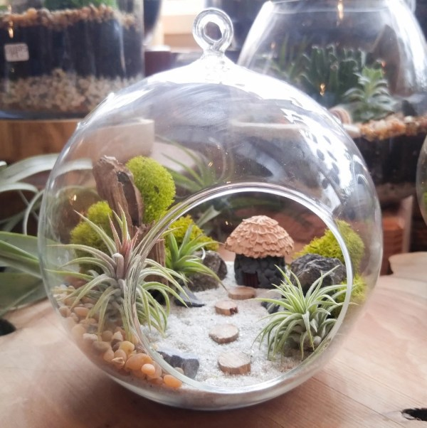 air plant terrarium kit diy miniature