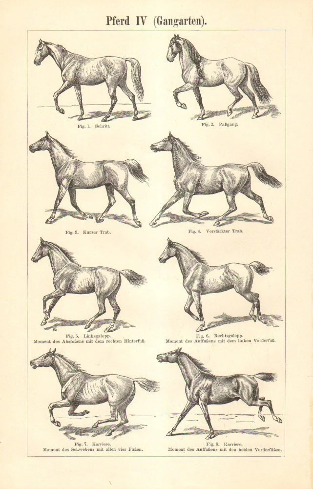hight resolution of image 0 1897 horse gaits