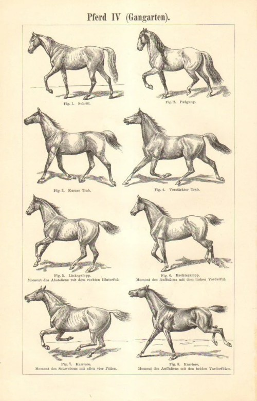 small resolution of image 0 1897 horse gaits