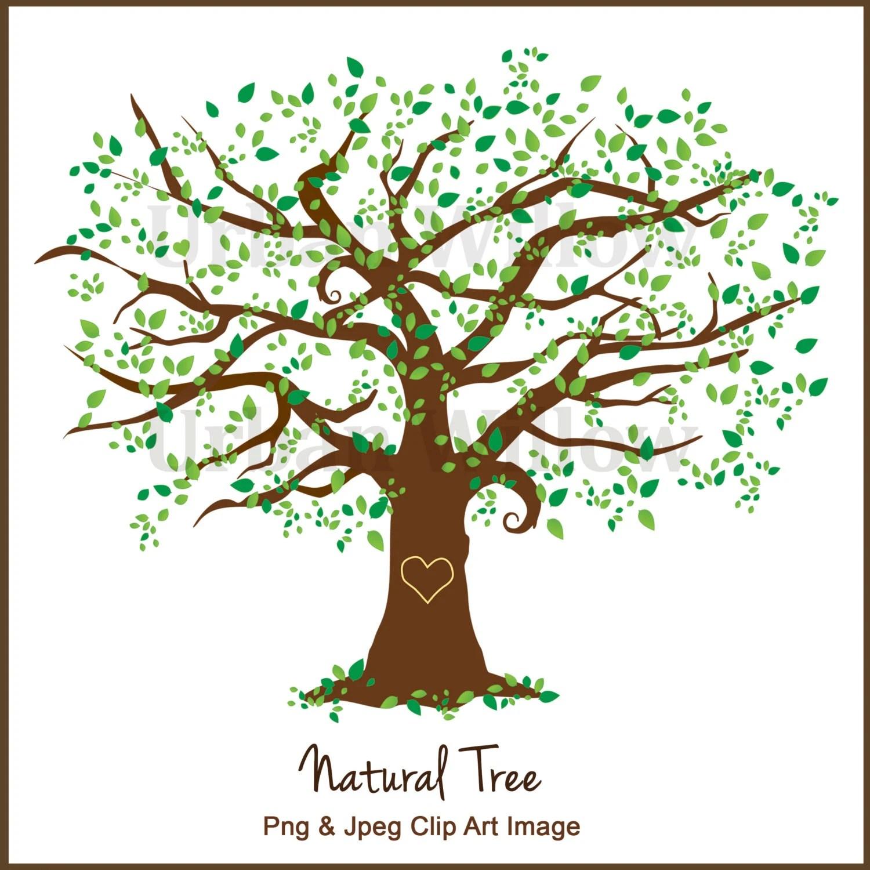Clipart Tree Clipart Elm Tree Graphics White Oak Maple