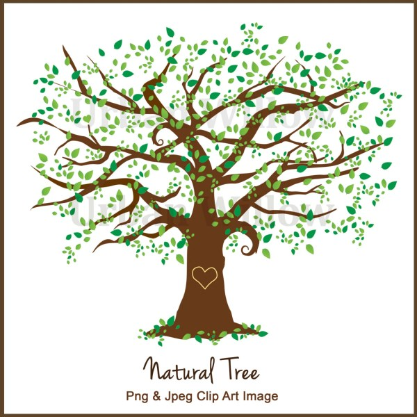 Clipart Tree Elm Graphics White Oak Maple