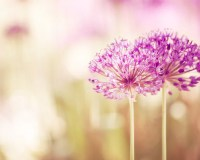 Flower Photography pink decor floral purple wall art beige ...