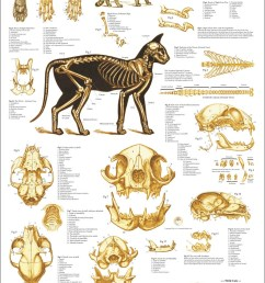 tiger tooth skull diagram [ 794 x 1190 Pixel ]