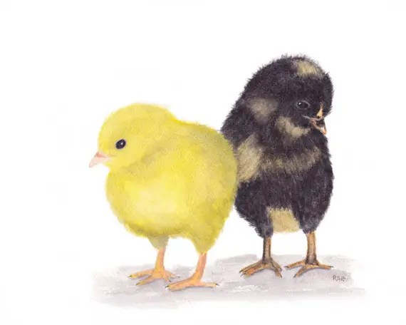 5 Important Things You Didn't Know on What do Baby Chickens Eat?