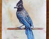 Steller's Jay - Original watercolor