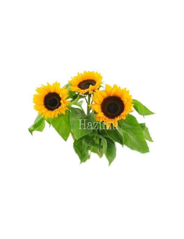 sunflowers garden seed plant