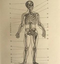 skull skeleton diagram [ 794 x 1063 Pixel ]