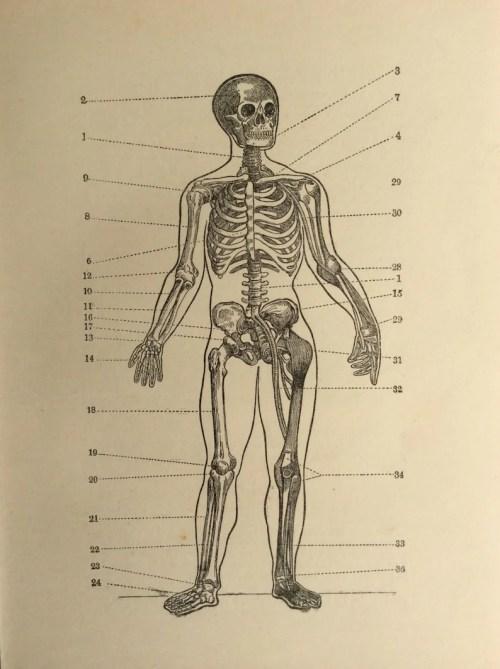 small resolution of skull skeleton diagram