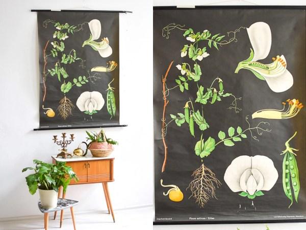 Pea Print Botanical School Poster Black