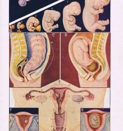 printable pregnancy poster 1957 pregnant woman poster digital image 2  [ 794 x 1181 Pixel ]