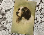 Antique Vintage 1910 Saint St Bernard Dog A Faithful Friend Greeting Postcard 1910s Dogs Pets Love Friendship Best Friend