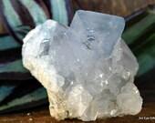 Celestite Cluster, Celestite Geode, Celestite Crystal Cluster, Crown Chakra crystal, Calming Crystal, Crystal for Prophetic Dreams ~2145