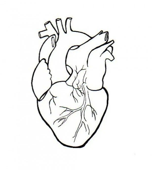 Easy Simple Human Heart Drawing