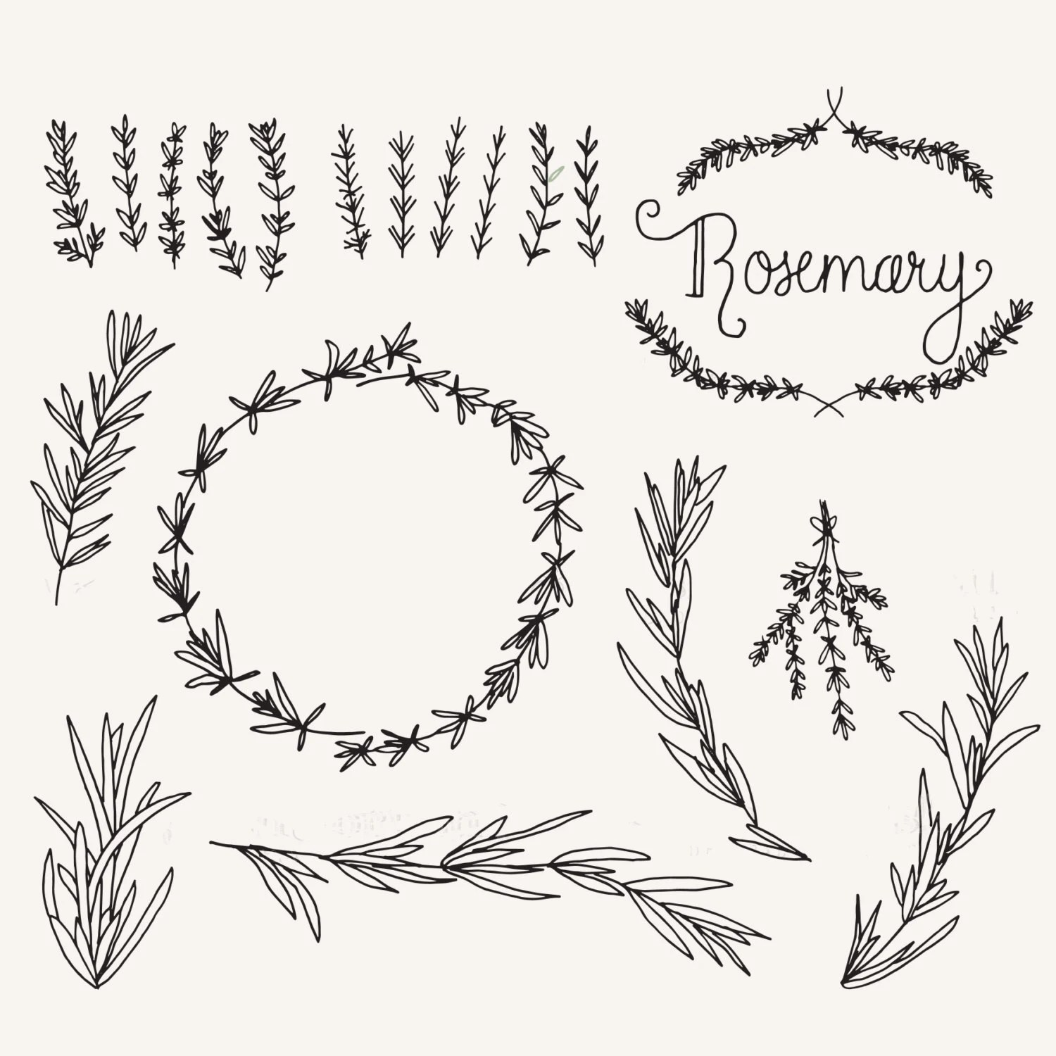 Rosemary Sprigs Clip Art // Photoshop Brushes // Hand