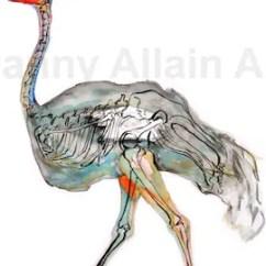 Ostrich Skeleton Diagram 3 Phase Compressor Wiring Etsy Bones Art Print