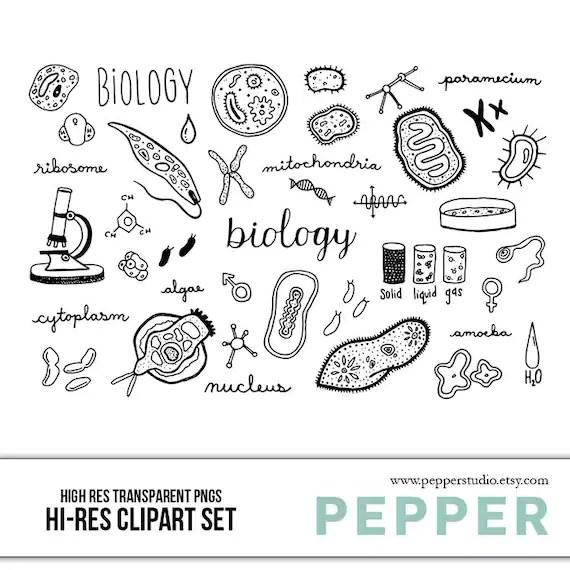 Biology Doodle Clipart Set Hi Res Printable Science School