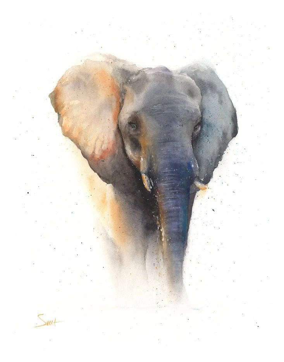 elephant art print elephant