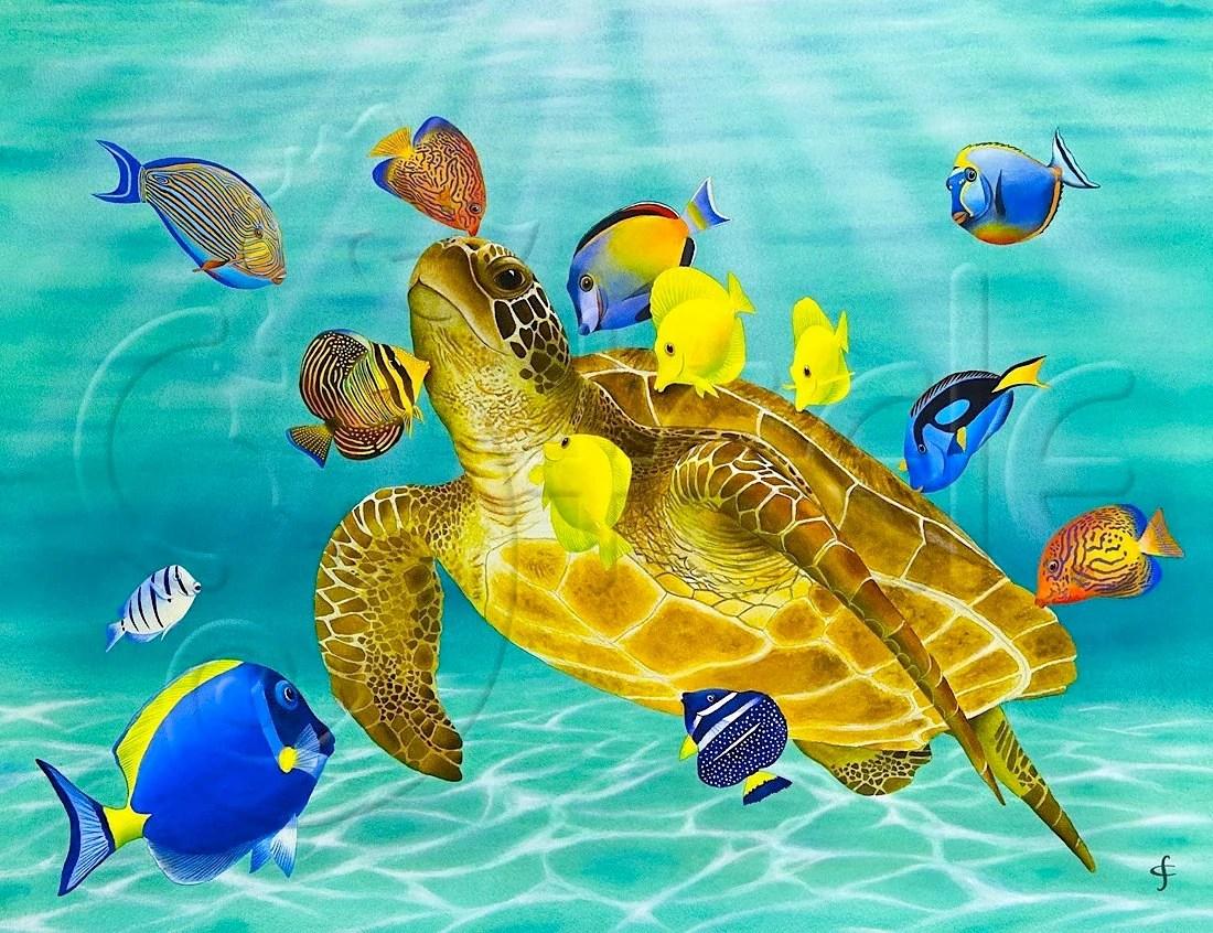 Hawaii Cute Pokemon Wallpaper Green Sea Turtle Surgeonfish Tang Fish Sun Dappled Water