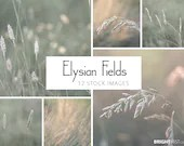 Elysian Fields Photo Set, 4000px by 3000px, instant stock photo download