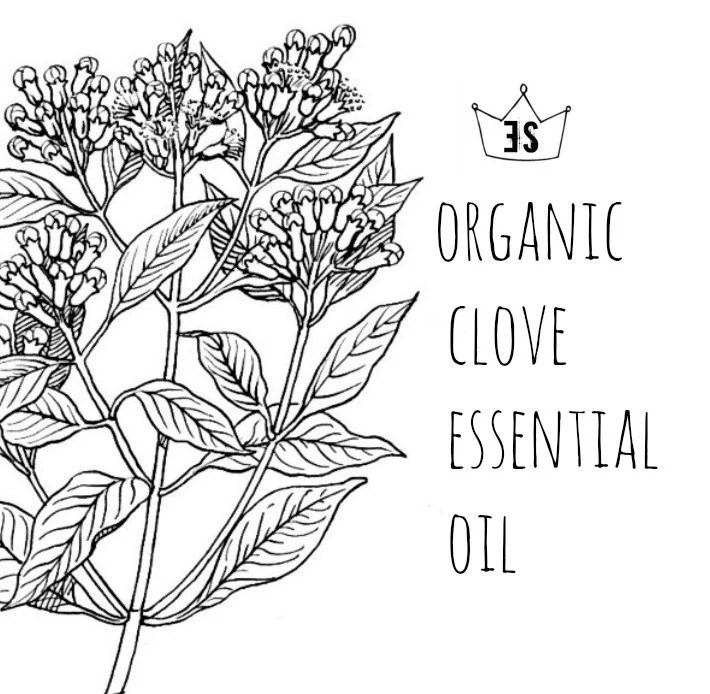 Organic Clove Oil Clove Essential Oil Pure Essential Oils