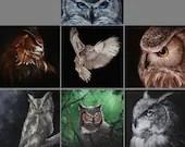 "2x4"" - 4x4"" Magnet ALL OWLS Bird Birds Ornithology Owl Art Print Refrigerator Square Magnet Stocking Stuffers"