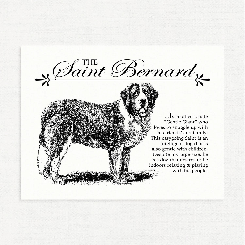 Saint Bernard Typography Wall Art Printable With Dog Breed