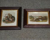 Pair of John James Audubon Quadruped Octavo Prints White Footed Mouse Chipping Squirrel