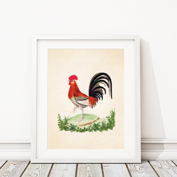 rooster kitchen decor cupboard jamaica print art vintage etsy image 0