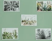 Botanical prints x5, cactus, succulent plats, art photography postcards, A6, small photo prints