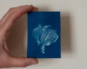An original mini art print, cyanotype, blue print of cabbage, plant print