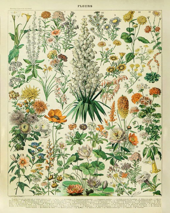 vintage flower poster french botanical print french flower decor home decor fine art print wall art vi998
