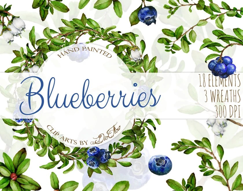 watercolor blueberry clipart blueberries