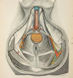 perineum diagram [ 794 x 1191 Pixel ]