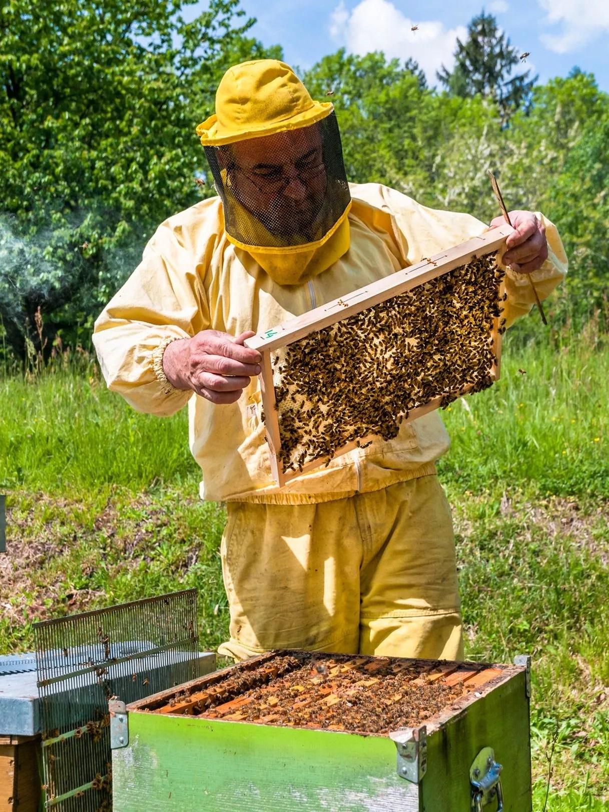 Installer Une Ruche Dans Son Jardin : installer, ruche, jardin, Installait, Ruche, Jardin