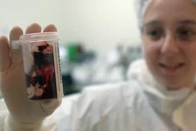 En 2001, les services vétérinaires de l'Orne procèdent à des tests pour dépister des bovins. Crédits Photo: Paul Delort / Figaro.