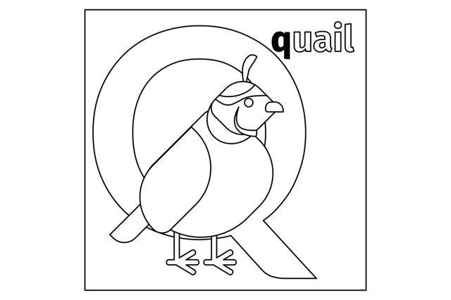 Quail, letter Q coloring page (16)  Illustrations  Design Bundles