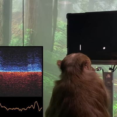 Monkey Playing Pong With His Mind? Elon Musk's Neuralink Makes It Possible