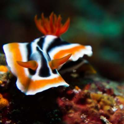 AI Has Lot To Learn From Sea Slug's Intelligence, Study Suggests