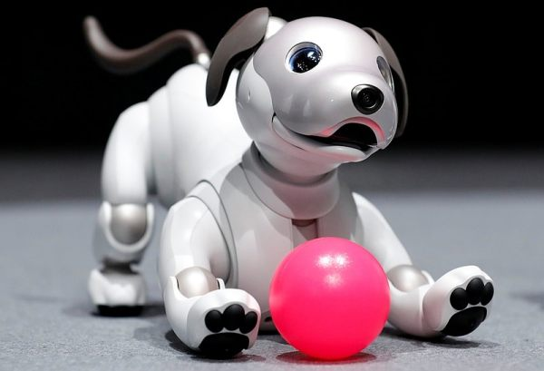 sony aibo playing reuters sony