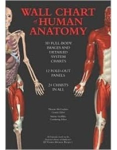 Wallchart of human anatomy  full body images detailed system charts by thomas maccracken also rh goodreads