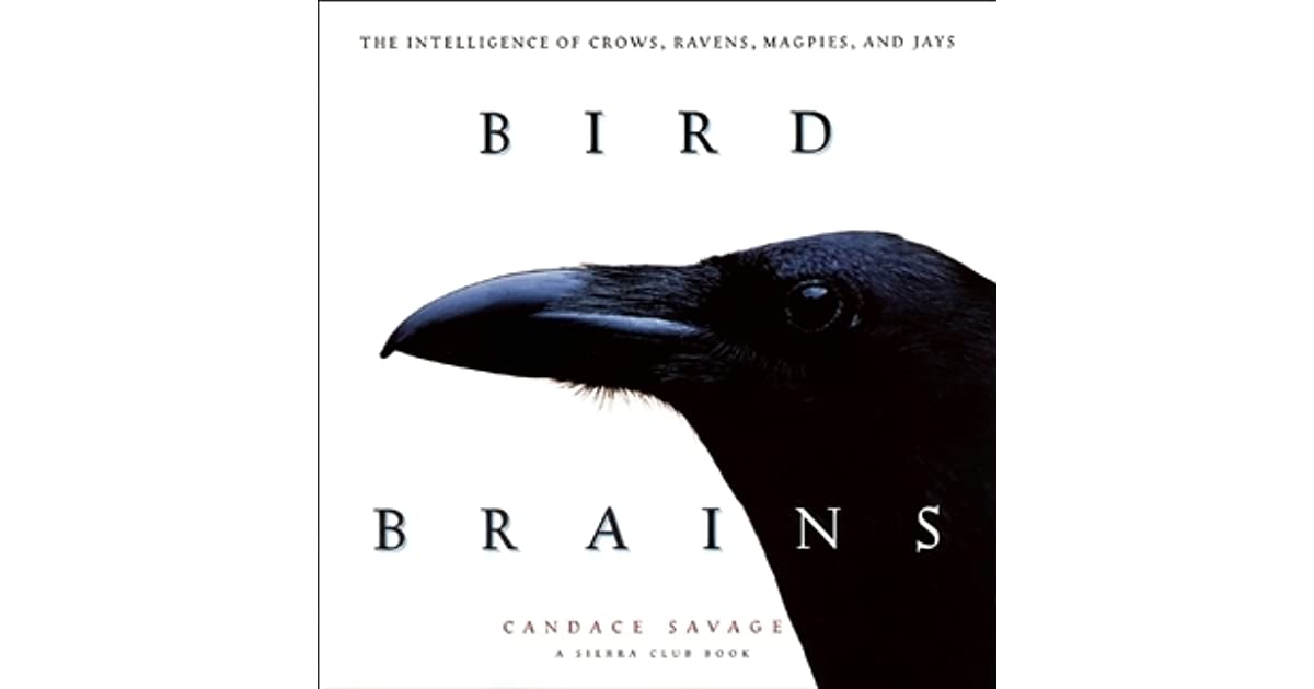 Bird Brains: The Intelligence of Crows, Ravens, Magpies, and Jays ...