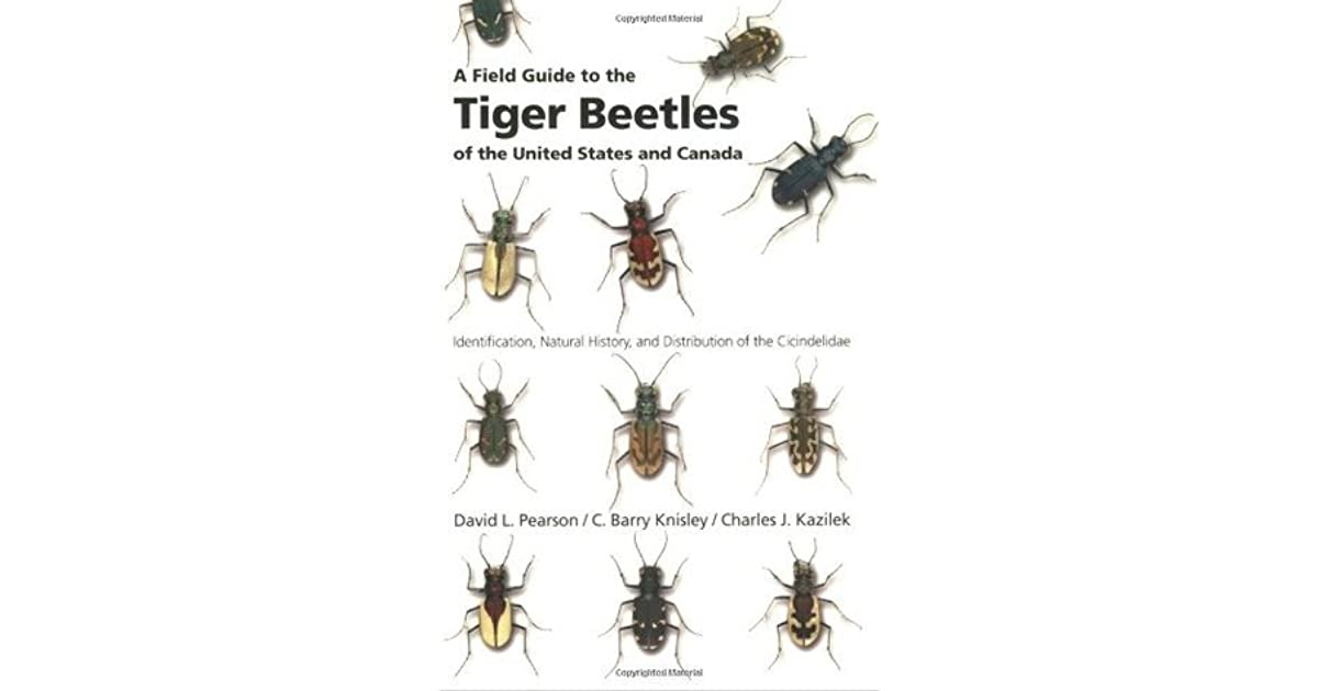 A Field Guide to the Tiger Beetles of the United States