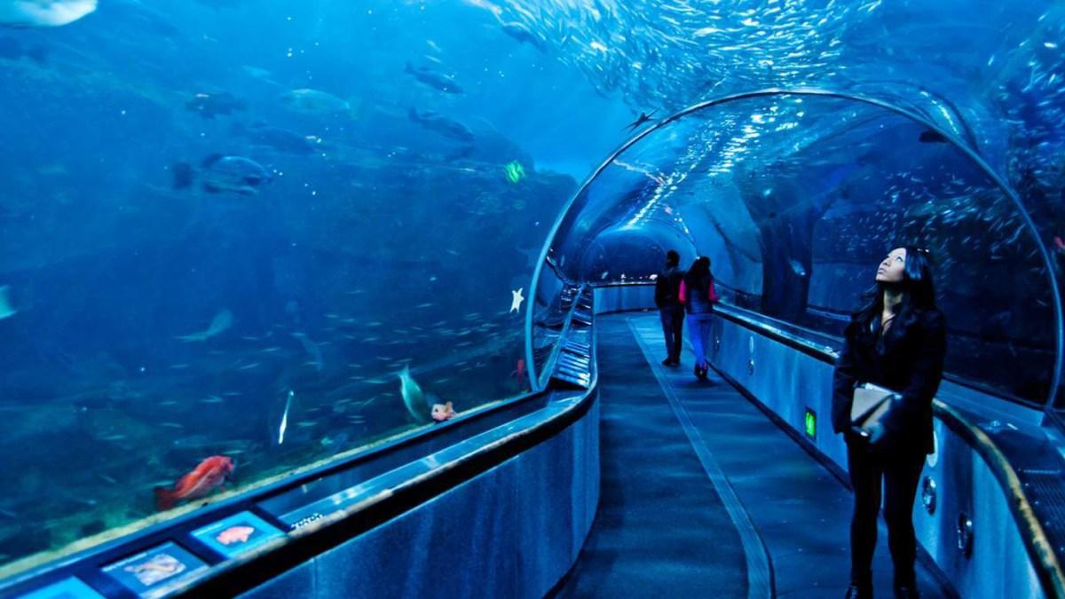 1558382551 Aquarium of the Bay tickets