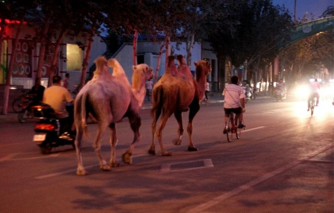 2013. Going for an evening ride in Dunhuang.