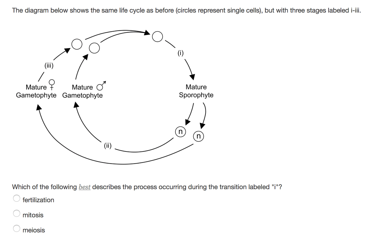 hight resolution of the diagram below shows the same life cycle as before circles represent single cells